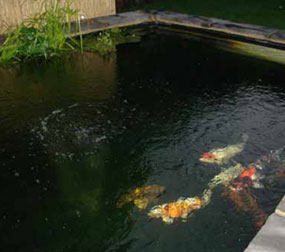 Grp lining services koi pond fibreglassing specialists for Koi pond specialist